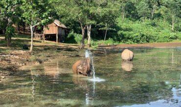 Elephant sanctuaries in South East Asia